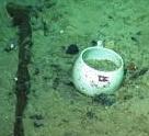 OCEAN FLOOR DISHES 3 - Copy